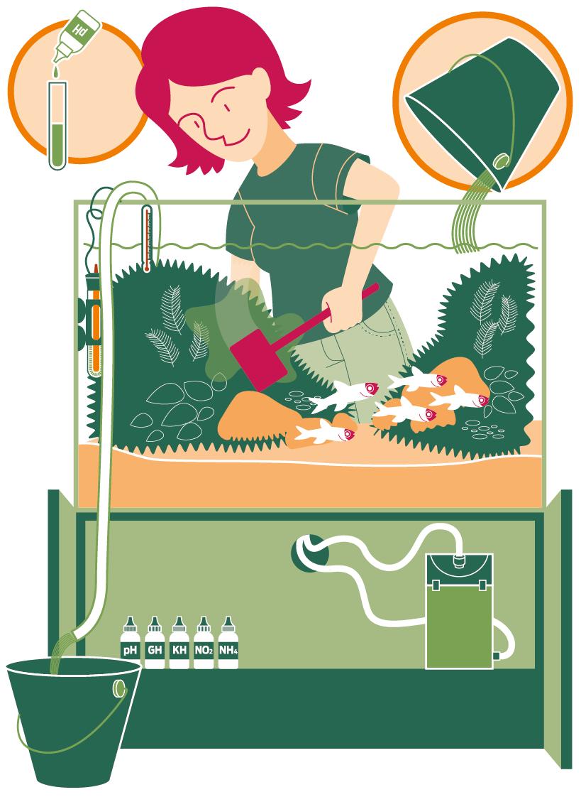 Infográfico: manutenção de um aquário, troca de água, limpeza, filtro