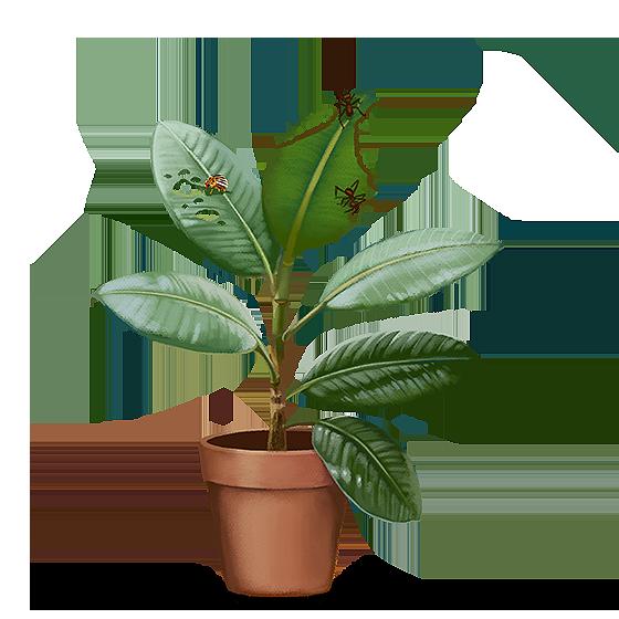 Ilustração: Planta com folhas roídas em pontos localizados