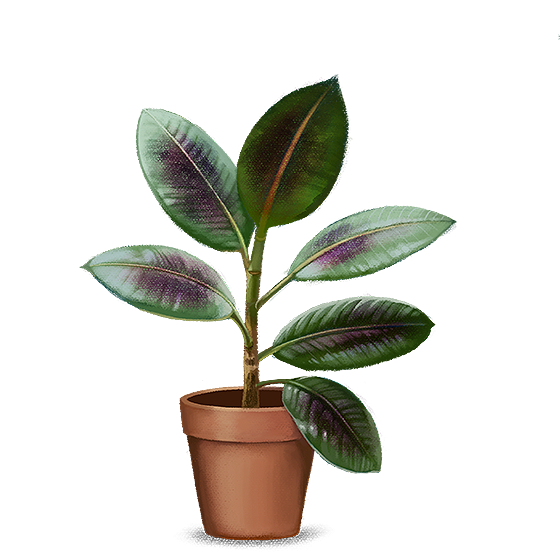 Ilustração: Planta com folhas arroxeadas