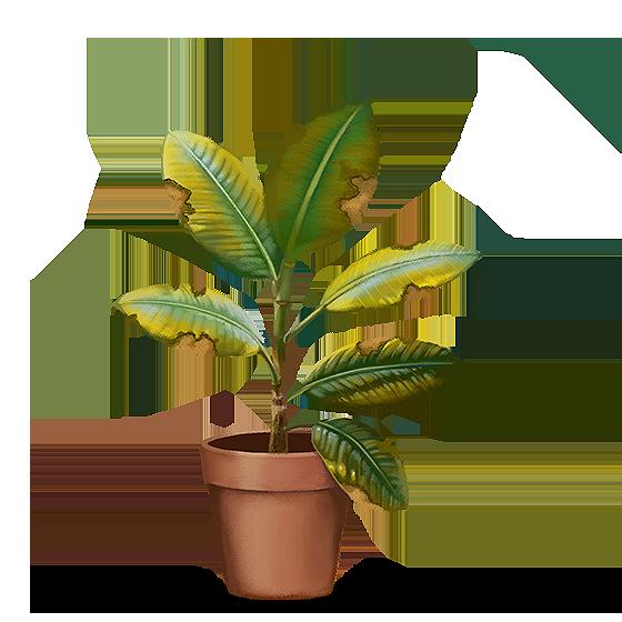 Ilustração: Planta com folhas melhores com bordas amareladas e esburacadas