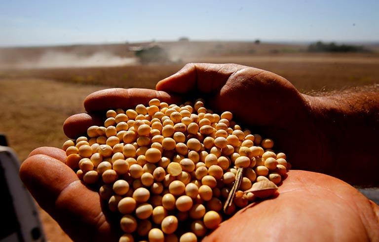 Periodo de colheita de soja na regiao de Toledo. Foto: Gazeta do Povo